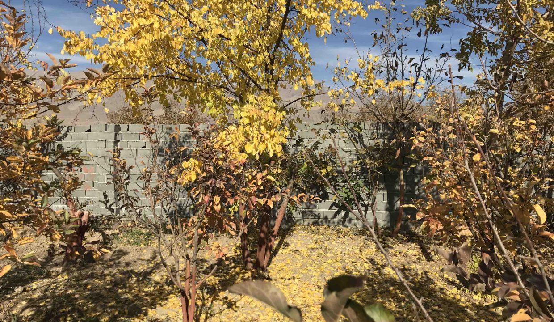 باغ دور دیوار
